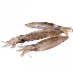calamar patagonico entero ibercook hosteleria